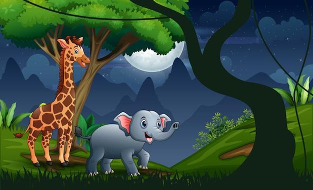 Een giraf en een olifant in de bosnacht
