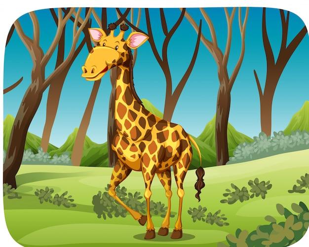 Een giraf in het bos