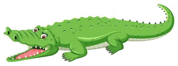 Een groene krokodil open mond