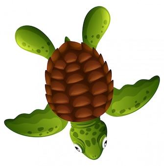 Een groene zeeschildpad op witte achtergrond