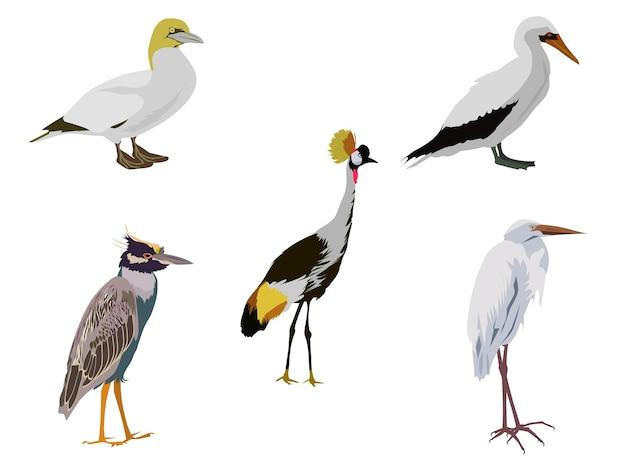 Een groep vogels op een witte achtergrond