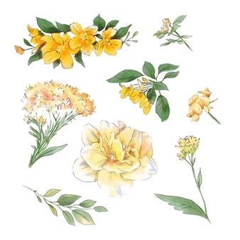 Een groot aantal aquarellen zachte bloemen en bladeren van super kwaliteit