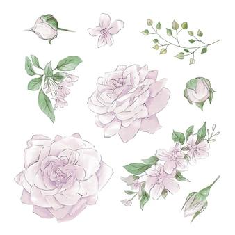 Een grote reeks aquarellen zachte rozen