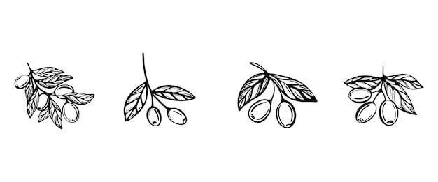 Een handgetekende set takken met olijven geïsoleerd op wit wordt geïsoleerd illustratie