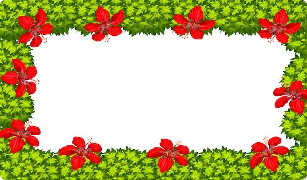 Een hibiscusbloemframe