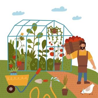 Een jonge man met een oogst van tomatenkasgroententuinthema mannelijke boer die planten verbouwt en gewassen oogst op de boerderij tussen het veld