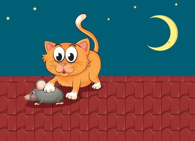 Een kat en een rat op het dak