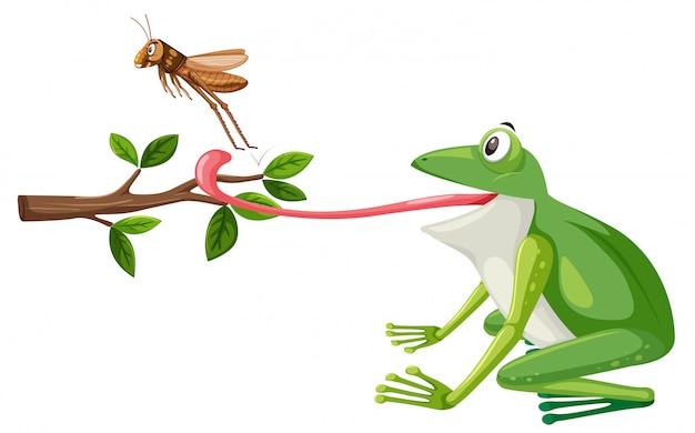 Een kikker probeert sprinkhaan te eten