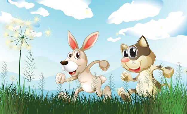 Een konijn en een kat op het veld