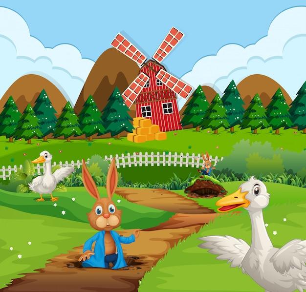 Een konijn in landbouwgrond