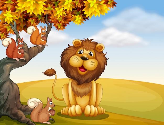 Een leeuw met drie eekhoorns op de heuveltop