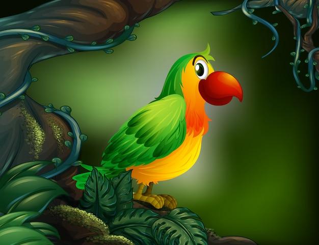 Een papegaai in het regenwoud