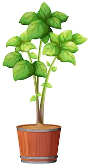 Een plant groeit in de pot
