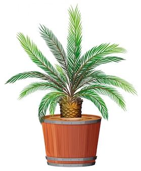 Een plant groeit in pot