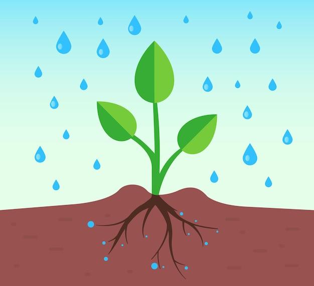 Een plant met een wortelstelsel giet regen. platte vectorillustratie.