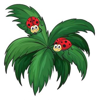 Een plant met twee lieveheersbeestjes
