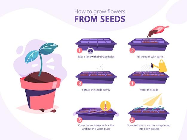 Een plantengids laten groeien. hoe je stap voor stap een bloem laat groeien