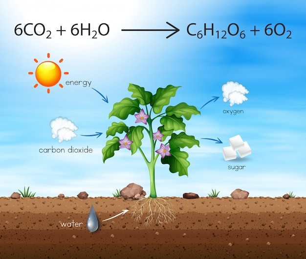 Een proces van tree produce oxygen