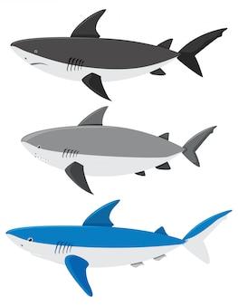 Een reeks haaien op witte achtergrond