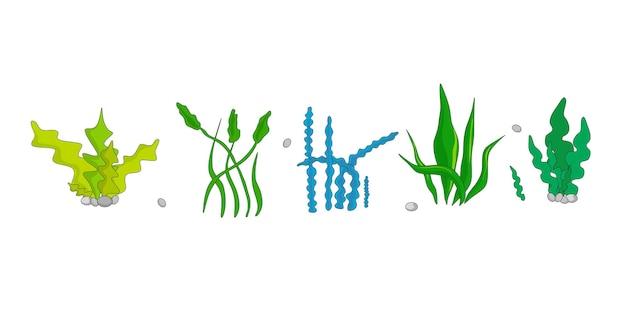 Een reeks vectorillustraties van algen in een cartoonstijl