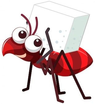 Een rode mier met suiker