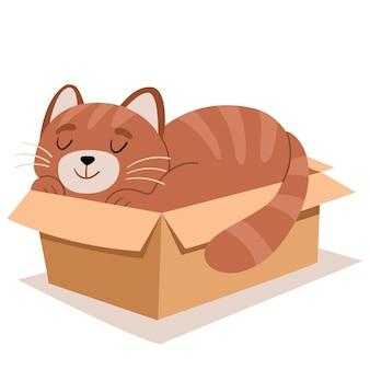 Een schattig gemberkatje viel in slaap in een doos