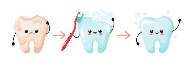 Een schattige witte tand en een geel getinte tand voor en na het poetsen. tandenvlekbehandeling, schoon