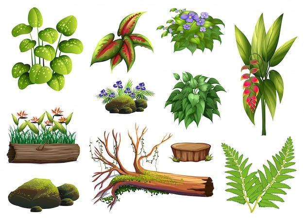 Een set plantenelementen