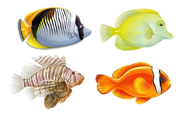 Een set van 4 tropische vissen