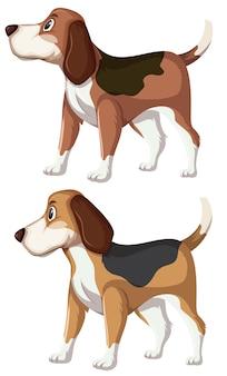 Een set van beagle hond