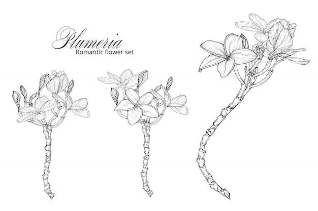Een set van zwarte en witte plumeria bloemen.