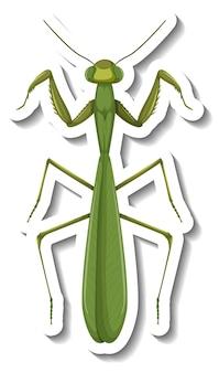 Een stickersjabloon met bovenaanzicht van een bidsprinkhaan geïsoleerd