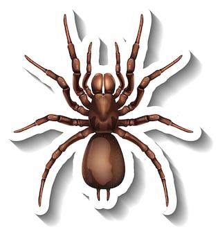 Een stickersjabloon met bovenaanzicht van een geïsoleerde spin