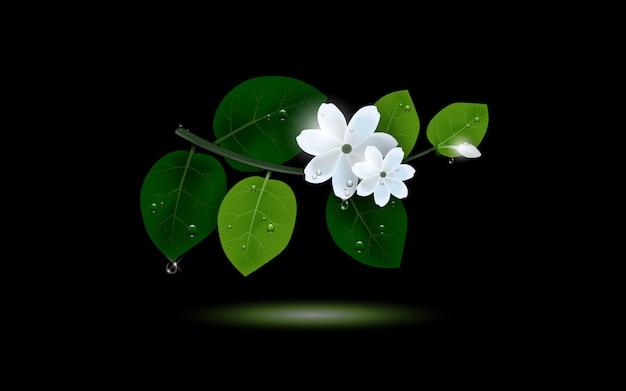 Een takje jasmijnbloem met glanzend druppelwater