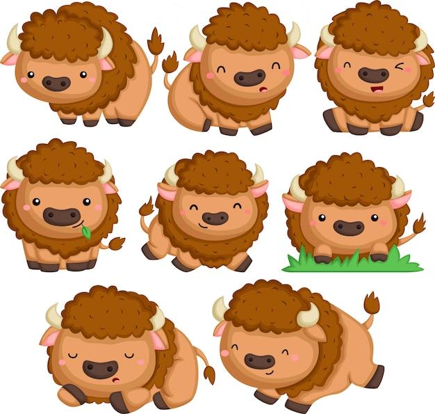 Een vector van veel bizons in veel poses