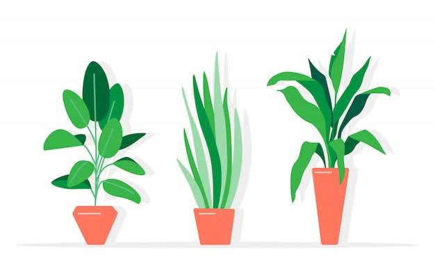 Een verzameling kamerplanten en bloemen