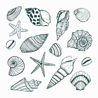 Een verzameling zeesterren en schelpen vector getekende omtrek van verschillende schelpen onderwaterwereld