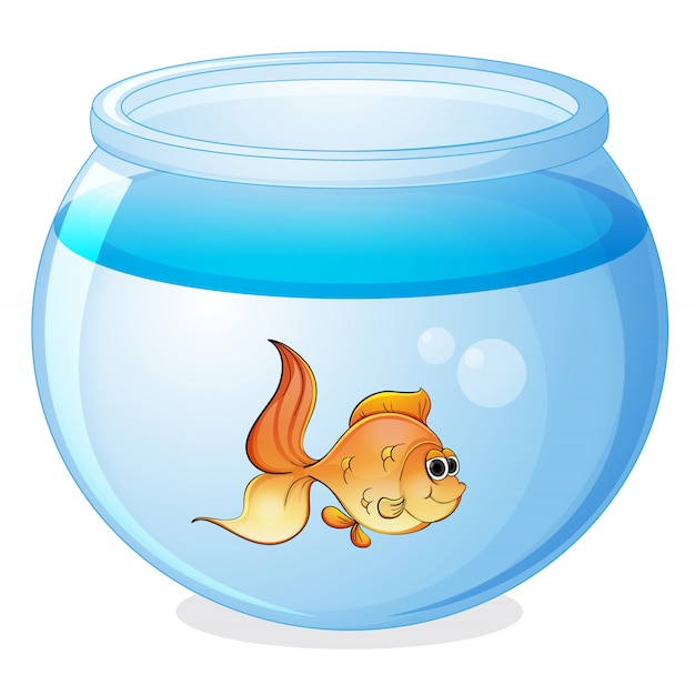 Een vis en een kom