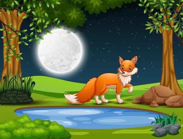 Een vos die 's nachts prooi zoekt