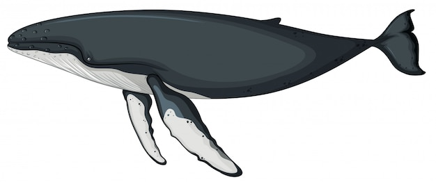 Een walviskarakter op witte achtergrond