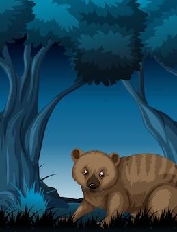 Een wombat in donker bos