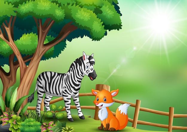 Een zebra en een vos die binnen het hek spelen