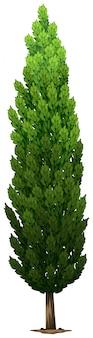 Een zweedse zuilvormige plant