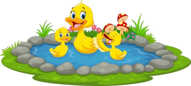 Eend en eendjes die in een vijver zwemmen