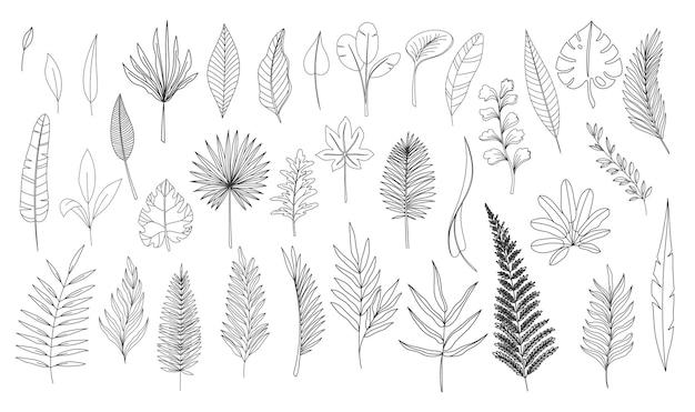 Eenvoudige lijn kunst tropische bladeren. overzicht bos palm monstera varen hawaiiaanse bladeren. hand getrokken tropische elementen vectorillustratie instellen.