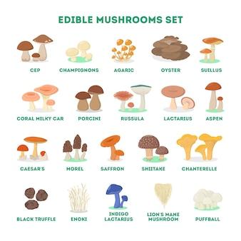 Eetbare paddenstoelenset. verzameling van natuurlijk product
