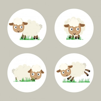 Eid al-adha het offer aan ram of witte schapen