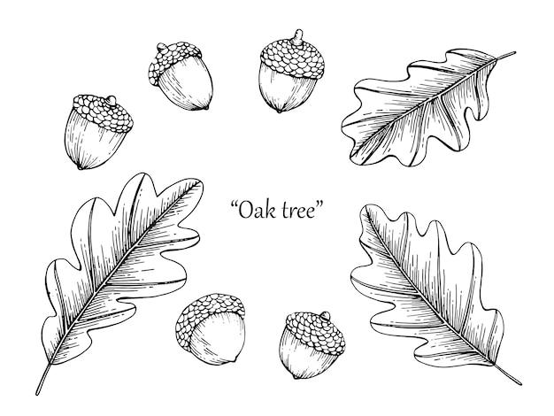 Eiken blad tekening illustratie met de hand getekende lijntekeningen.