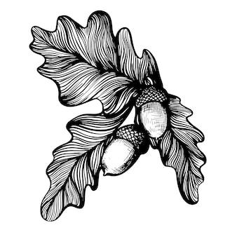 Eiken takje met eikels hand getrokken vectorillustratie