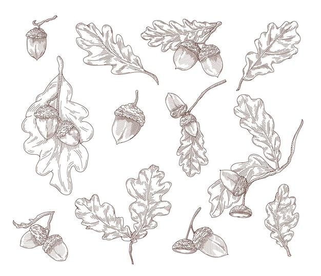 Eikenbladeren, takken en eikels hand getrokken illustraties set. quercusboomelementen in vintage stijl gravure